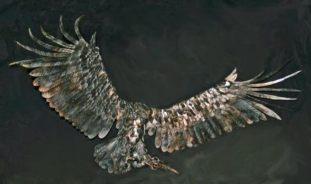sea eagle sculpture